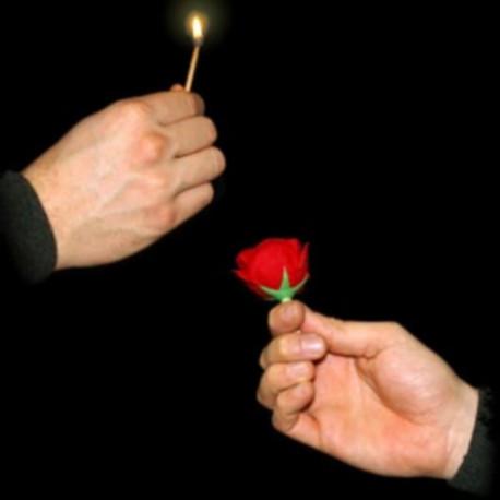 Allumette en rose