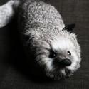 Renard gris à ressort