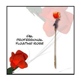 Rose Volante Professionnelle